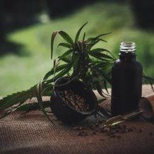 CBD cancer : l'huile de cannabis est-elle réellement efficace ?